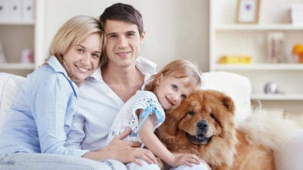 Wills & Trusts dog-young-family Direct Wills Upton